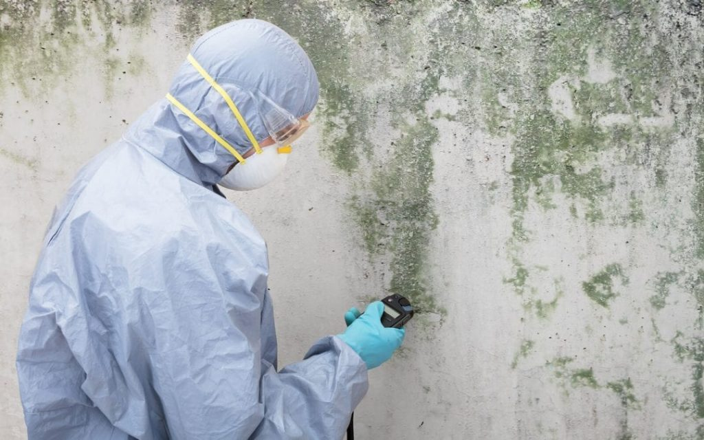 Mold Remediation Toms River